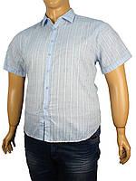 20a09df5324 Мужская рубашка большого размера в категории рубашки мужские в ...