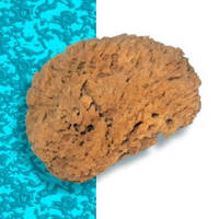 Натуральная морская губка Natural Coral Effect. 170 мм.