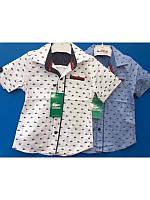 Модная белая рубашка с коротким рукавом LACOSTE  для мальчика 98-116