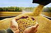 В Южном появится новый завод по переработке сои