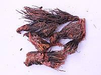 Красная щетка 35 грамм