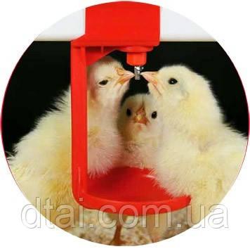 Поилки ниппельные для птицы Impex, Нидерланды (общая информация)