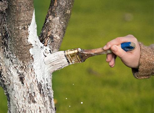 Краски, побелки для деревьев