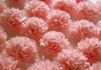Бумага тишью розово - персиковая  10 листов