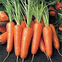 Морковь, фото 1