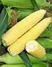 Кукуруза сахарная Сигнет