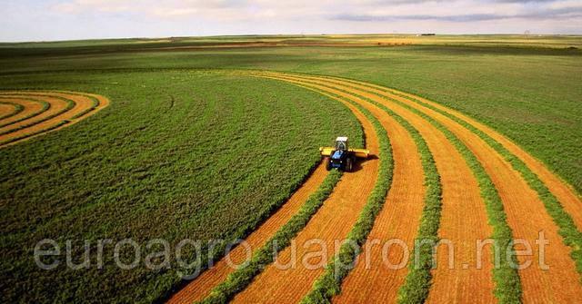 Правительство внесло изменение в порядок аренды земель сельхозназначения