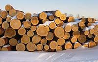 Продам лес кругляк(пиловочник) сосна.ТТН;ЛГ-25 НДС Кругляки дуба. Кругляк ясень