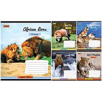 Тетрадь в линию 48 листов 760281 «Wild Continents»