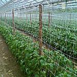 Сетка Tenax Ортинет 1.7х10 м для огурцов, цветов, фото 6