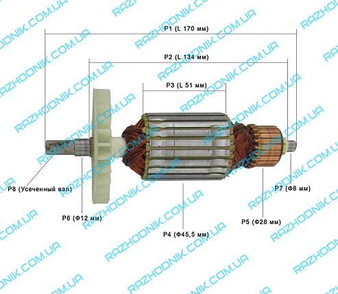 Якір для електропили Интерскол ПЦ-16, фото 2