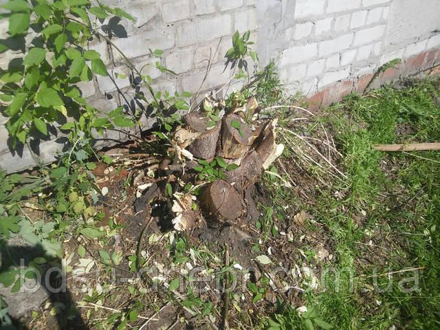 Уборка корней, Днепр