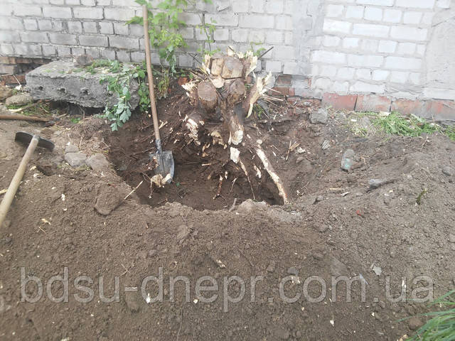демонтаж корней