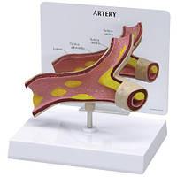 Модель артерии