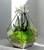 """Флорариум """"Пятиугольная пирамида"""" с орхидеей, ширина -25 см, высота -28 см."""