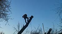 Арбористика Киев, фото 1
