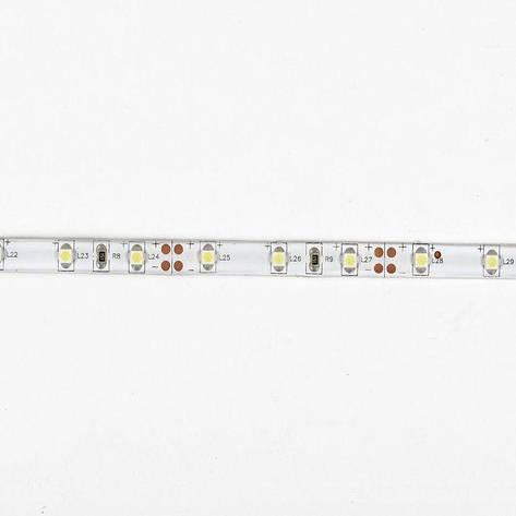Светодиодная лента 3528 60 диодов\метр Герметичная Standart, фото 2