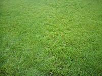 Трава газонная  «Универсальный газон», Германия