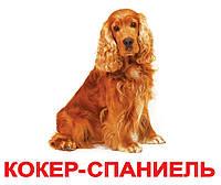 """Карточки большие украинские с фактами, ламинированные """"Породы собак"""" 20 карт., 028816"""