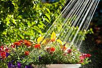 Нові, яскраві лійки для рослин і квітів.