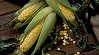 География экспорта украинской кукурузы