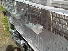 Клетки для кролей