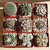 Горшки для цветов, кактусов и суккулентов,
