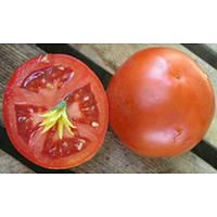 Отранто F1 - томат детерминантный, 1 000 семян, Nunhems Nunhems (Нунемс) Голландия