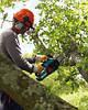 Валка / обрезка / спил / вырубка деревьев, веток эллектропилой (бензопилой) в Запорожье