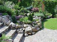 Растения для рокариев – рекомендуемые виды и правила подбора композиций