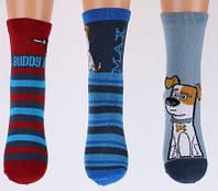 Детские носки для мальчиков Pets оптом ,23/26-31/34 pp.