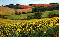 Финиш посевной: удалось ли аграриям выполнить план по посеву масличных?