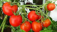 Падение экспорта украинских свежих томатов