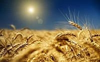 Новый сайт от Минагропрода для поддержки отечественных аграриев