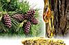 Живица кедровая (терпентиновый бальзам 5%, кукуруза 100 мл)