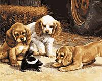 Раскраска по номерам  40 х 50 см  Знакомство  щенки