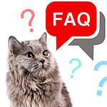 Часто задаваемые вопросы по содержанию, уходу и кормлению котов