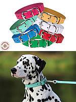 Кожаный ошейник для собак от BronzeDog