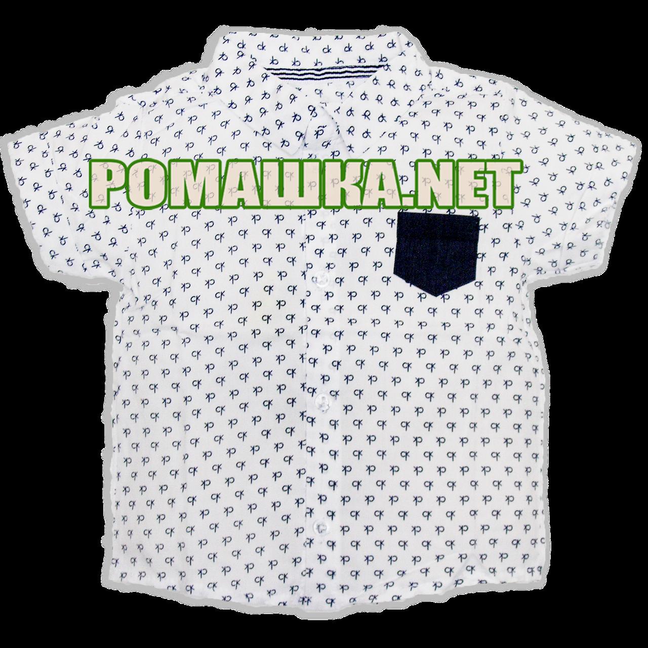Детская рубашка с коротким рукавом р. 92-98 Calvin Klein для мальчика ткань ПОПЛИН ТМ Малина 3672 Белый 98
