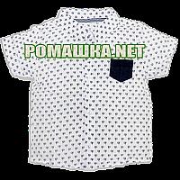 Детская рубашка с коротким рукавом р. 80-86 Calvin Klein для мальчика ткань ПОПЛИН ТМ Малина 3672 Белый 80