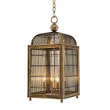 Lantern Falcon