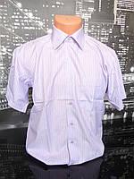 Рубашка мужская короткий рукав Bossado 38-46