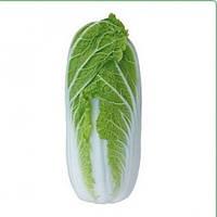 Капуста пекинская КС 374 F1 1000   KS 374 (Тенсай) Kitano Seeds  / Китано Сидс