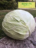 Семена капусты Вестри F1 ( Семинис)  упак. 2500 насінин / семян