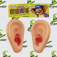 Уши Человека