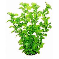 Aquatic Plants (Акватик Плэнтс) Аквариумное растение, 34 см х 6 шт/уп.