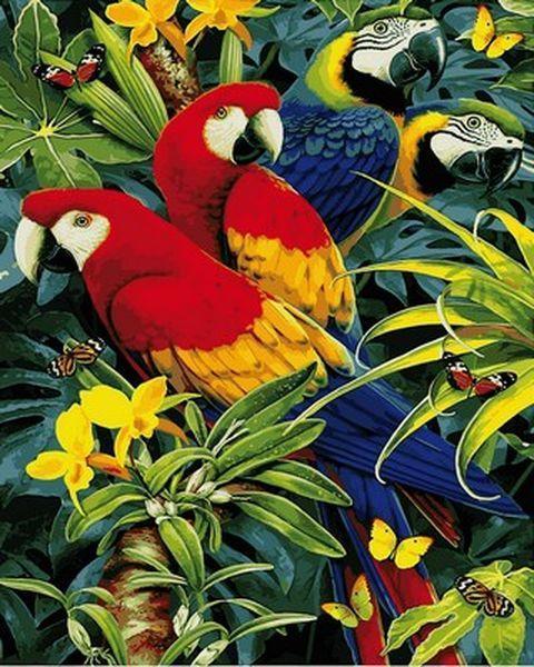 Картины по номерам 40×50 см. Четыре попугая