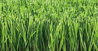 Grass Nature D3 спортивный газон