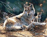 Картины по номерам 40×50 см. Волки
