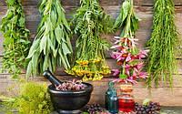 Полмиллиона с гектара – огромный потенциал лекарственных трав.
